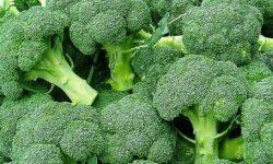 Брокколи — выращивание