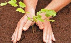 Посадка саженцев плодовых деревьев и кустарников весной